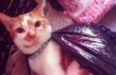Biggie in a Plastic Bag