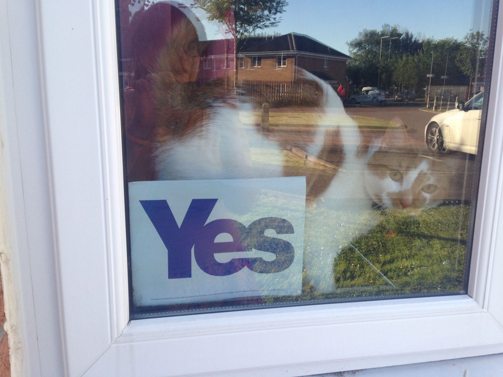 #yesbecause: it's our country, and we deserve the right to decide how to run it;