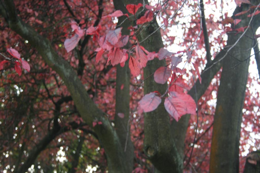 last year's looks: coats for autumn;
