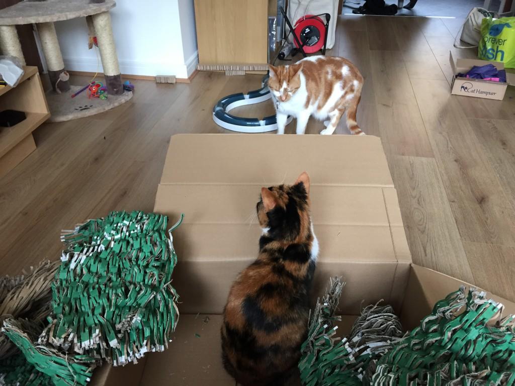 PetShop.co.uk - always with the box