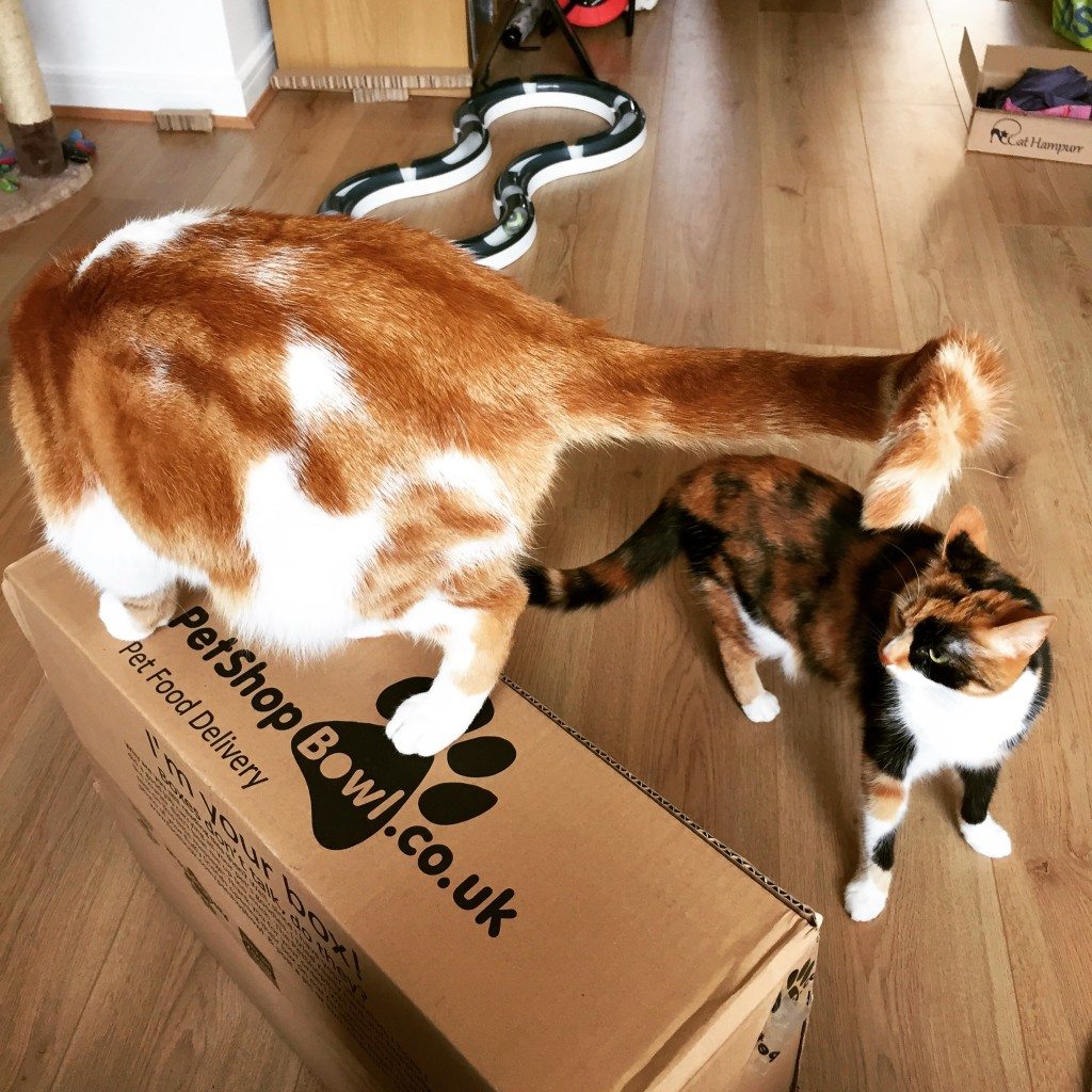 PetShop.co.uk - a box! a box!
