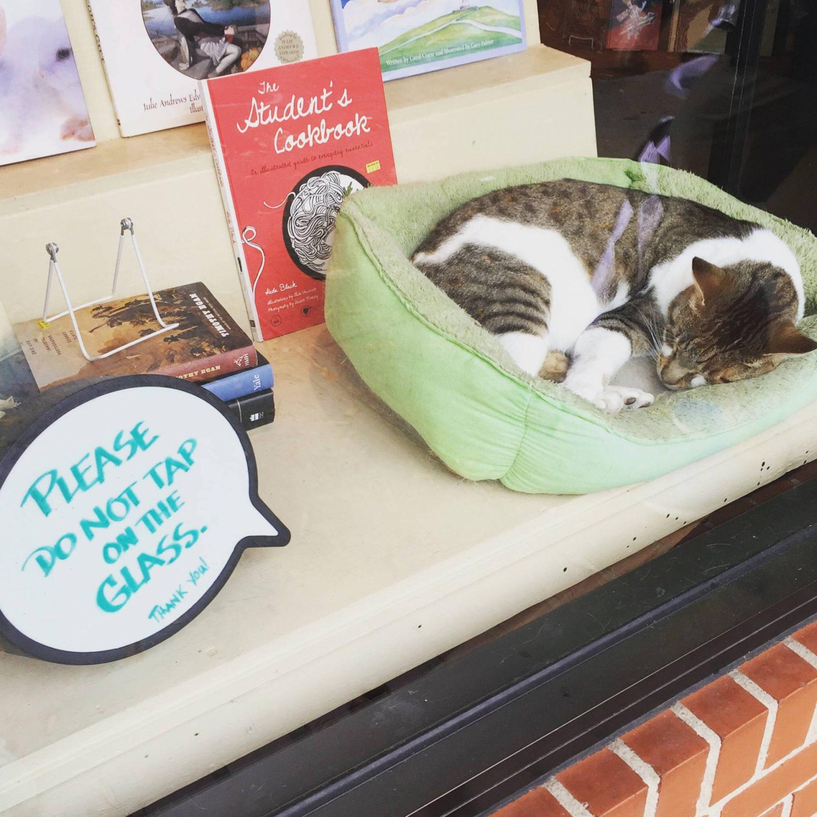 Bookshop Cat, The Bookshop at Chapel Hill