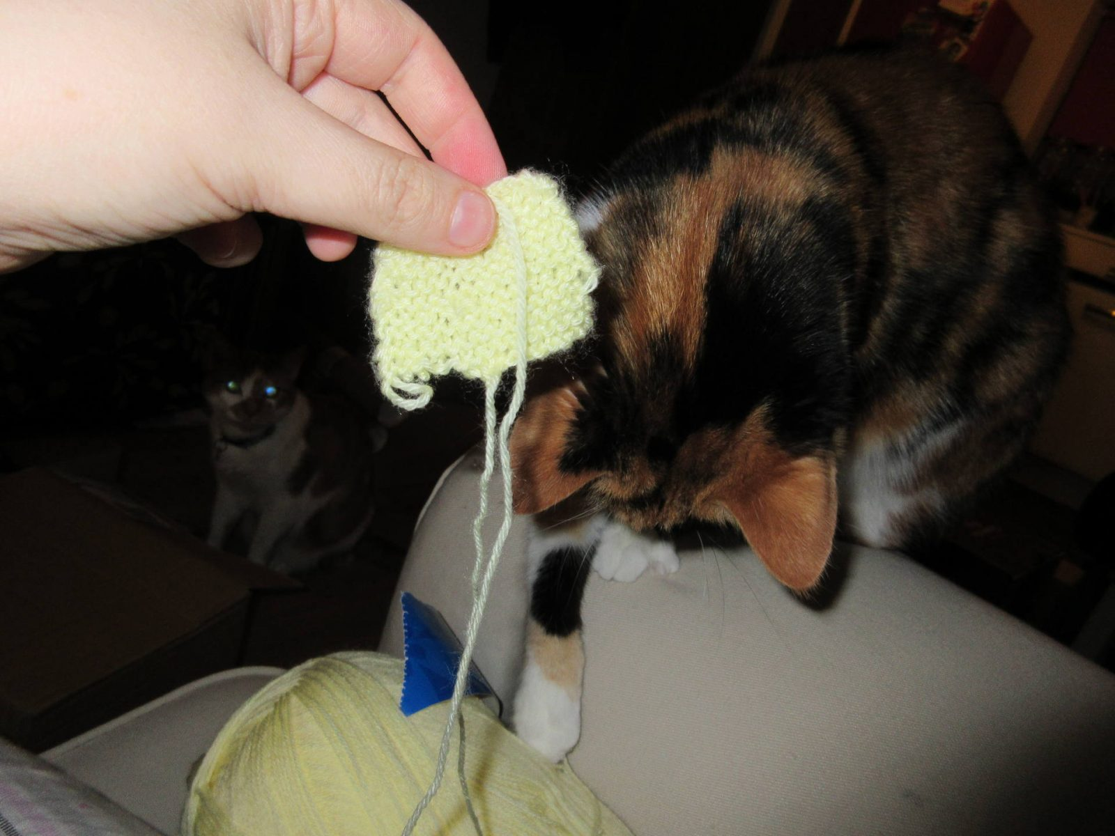 #digitaldetox - Cats vs. Yarn