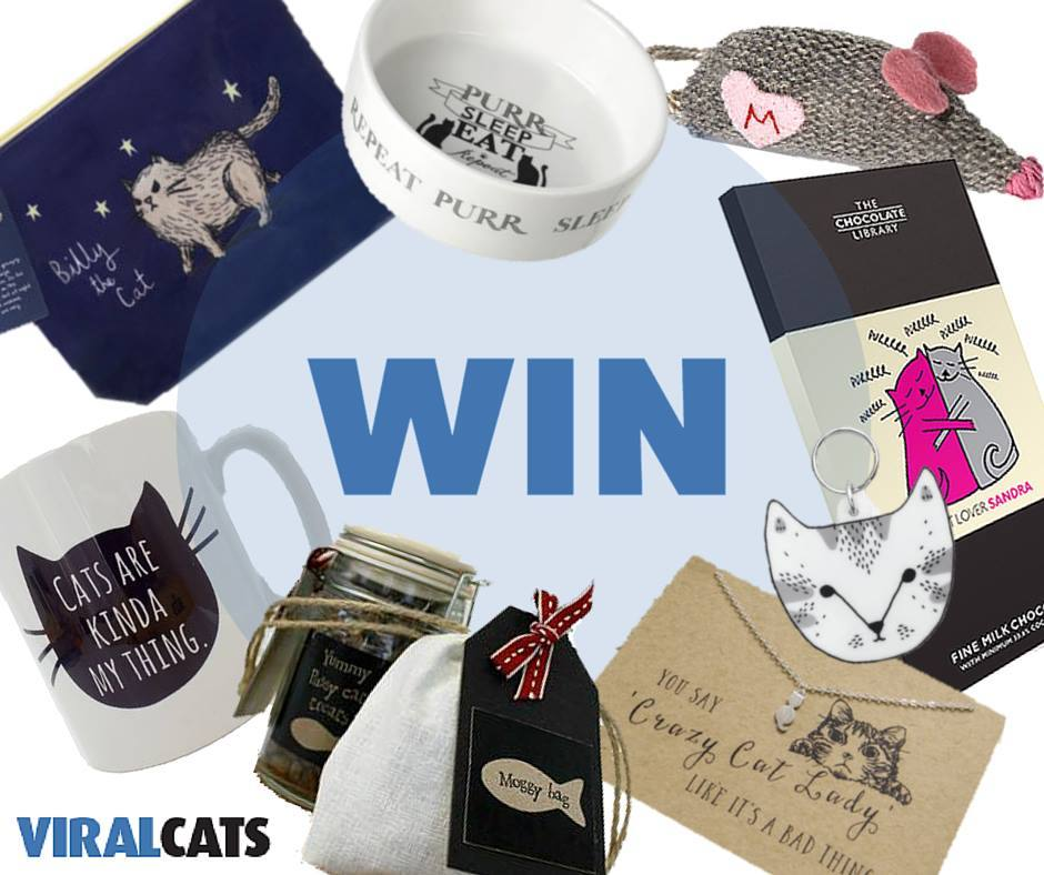 Viral Cats cat hamper prize