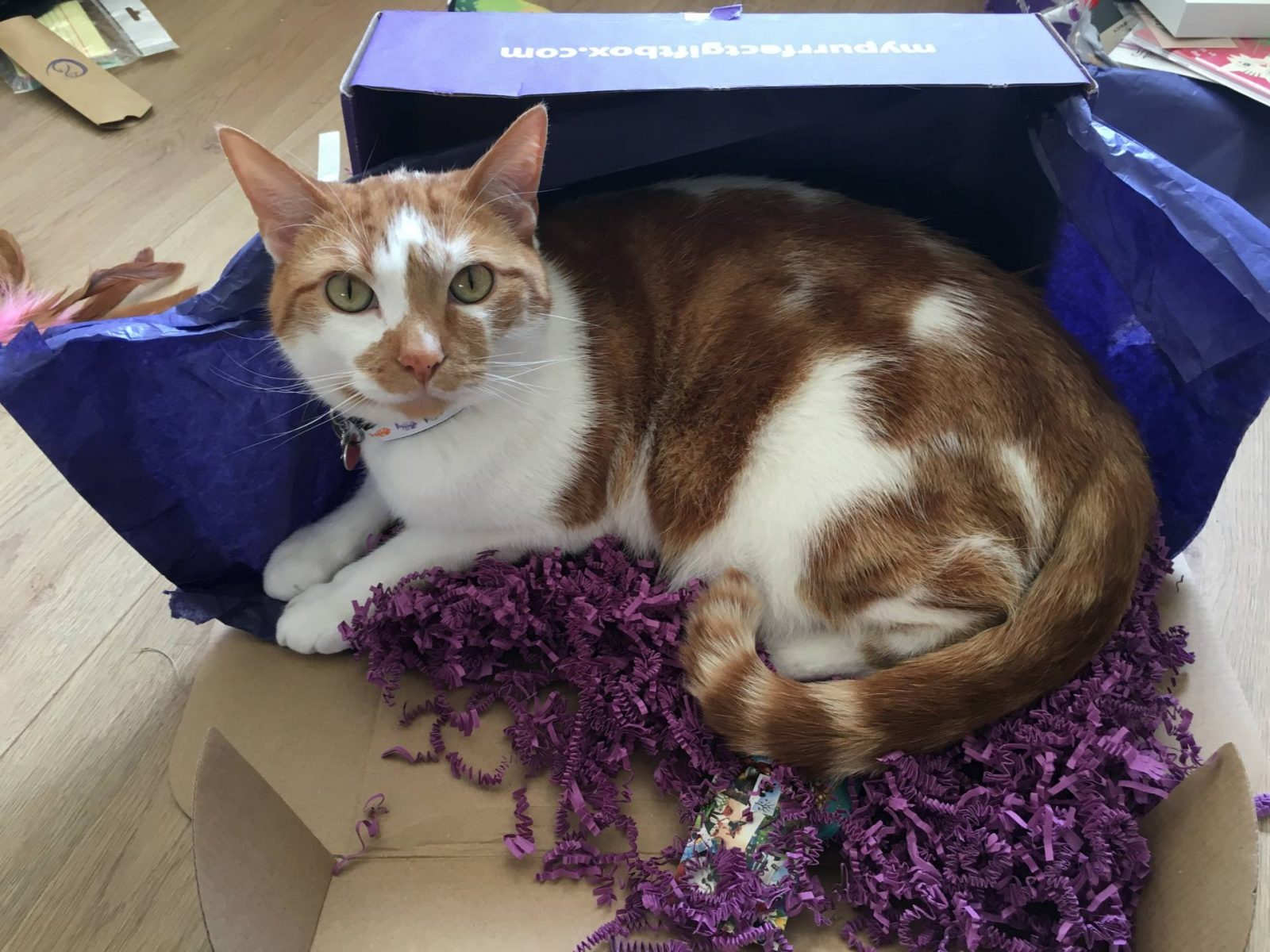My Purrfect Gift Box - Biggie in a Box