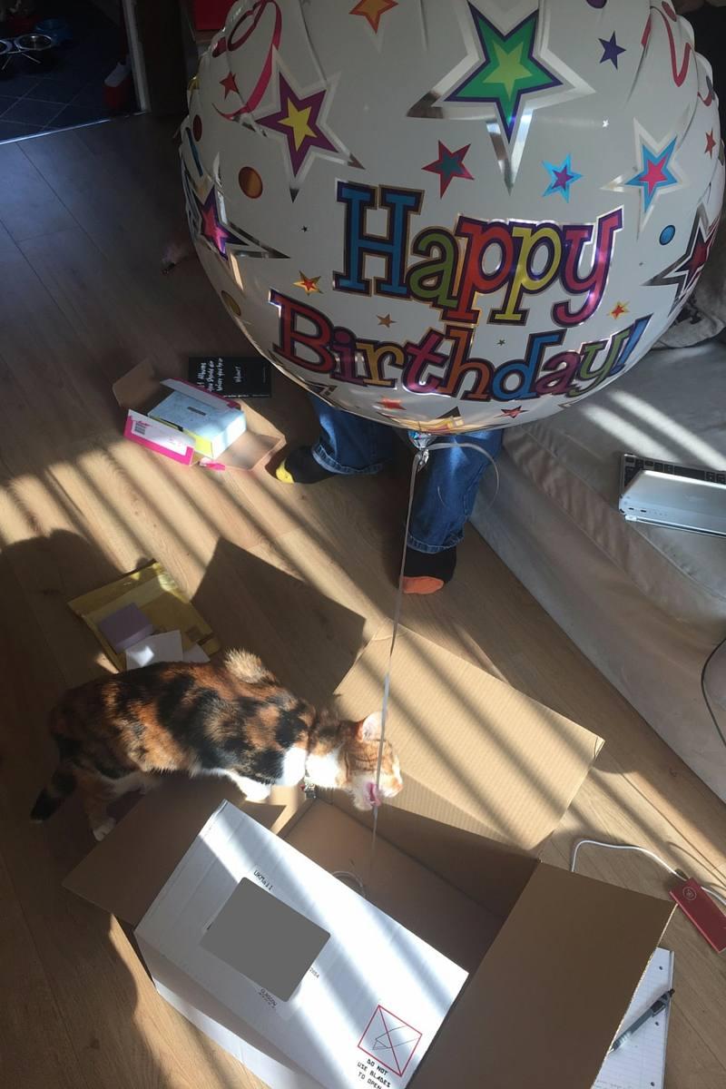Birthday Rituals - Hellbeast Cat