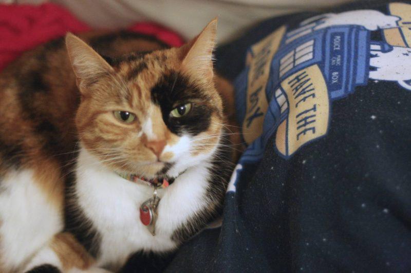 Bonsoir of London pyjama review - TARDIS kitty