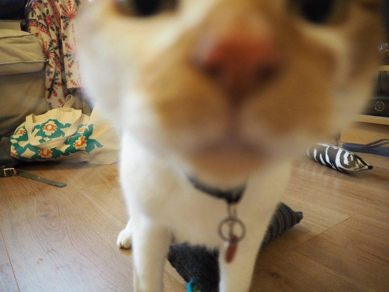 4cats premium valerian cat toys, ft. Biggie-cat