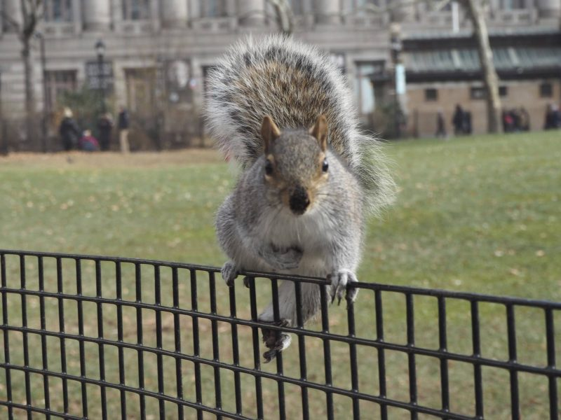 New York travel blog: squirrels in Battery Park