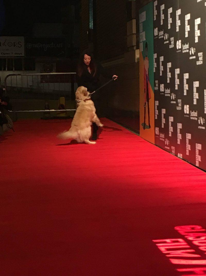 VisitScotland Ambassadog, George, at Glasgow Film Festival 2018 opening gala
