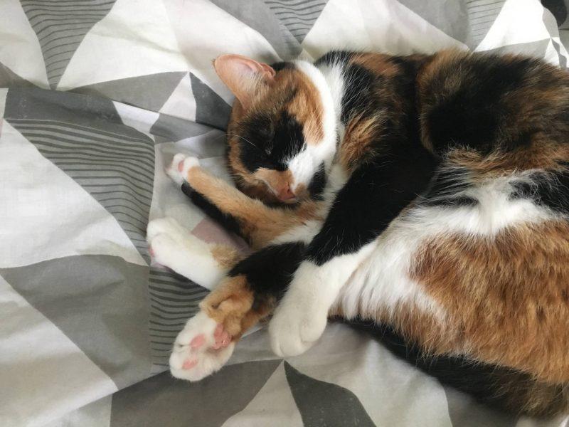 A sleepy Scooter-cat, August 2018