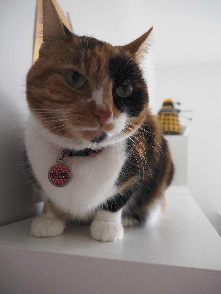 What to do if your cat goes missing: Scooter in her Cool Cat Collar